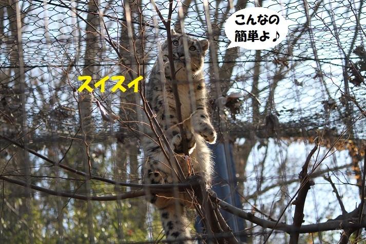 215 - コピー