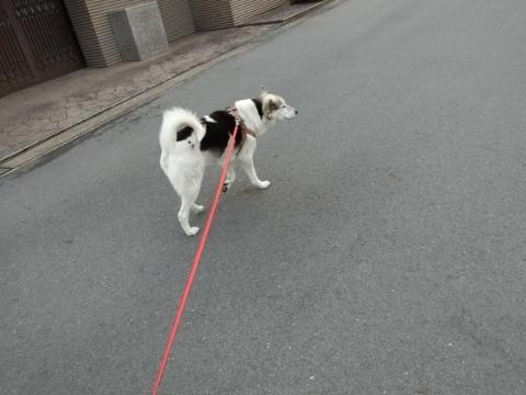 2018-03-01 散歩 006 (480x360)