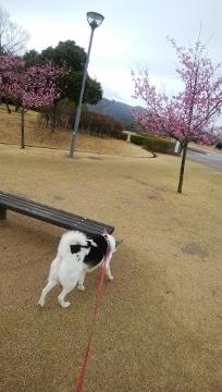 2018-03-21 防災公園 007 (204x360)