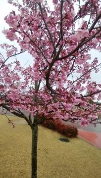 2018-03-21 防災公園 008 (204x360)