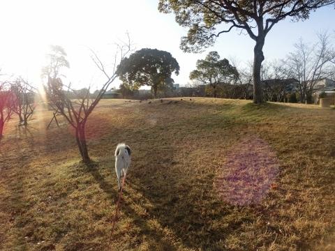 2018-03-23 散歩 003 (480x360)