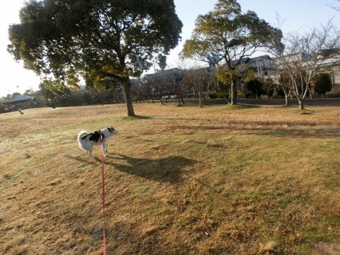2018-03-23 散歩 005 (480x360)