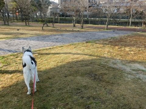 2018-03-23 散歩 008 (480x360)