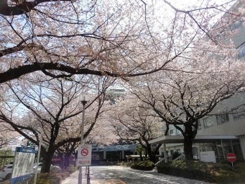 2018-03-31 東京 004 (480x360)