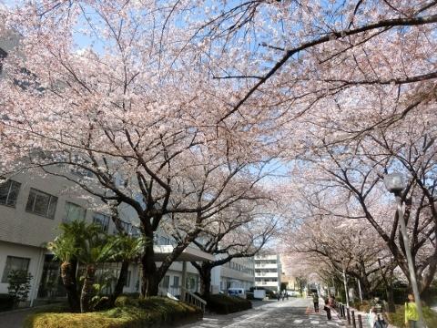 2018-03-31 東京 012 (480x360)