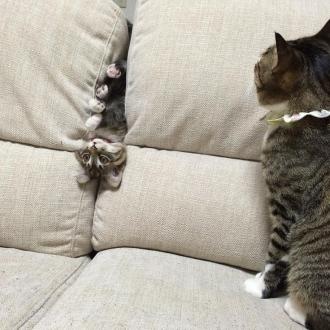 逆さまになった猫。