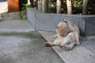 くたびれた猫。でも可愛い。