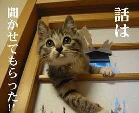 猫が障子を破って乱入。話は聞かせてもらった!