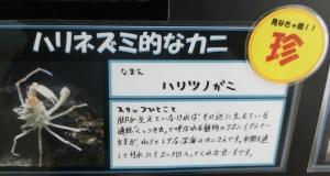 竹島2018年2月-9