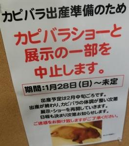 竹ショー2018-13