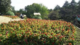 20171009昭和記念公園(その4)