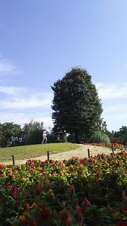 20171009昭和記念公園(その5)