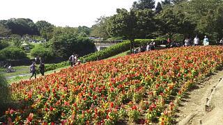 20171009昭和記念公園(その7)