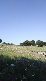 20171009昭和記念公園(その32)