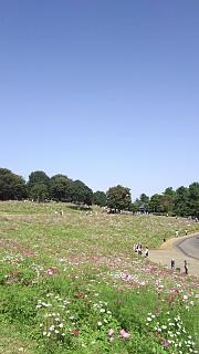 20171009昭和記念公園(その35)