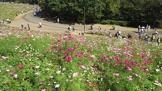 20171009昭和記念公園(その36)