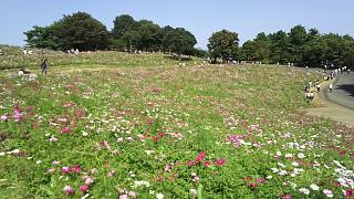 20171009昭和記念公園(その38)