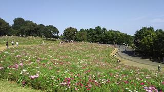 20171009昭和記念公園(その44)