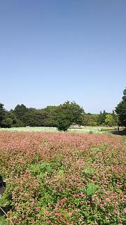 20171009昭和記念公園(その45)