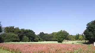 20171009昭和記念公園(その46)