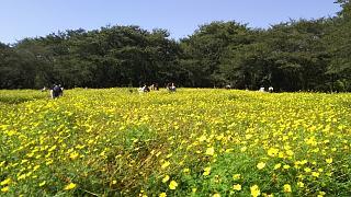 20171009昭和記念公園(その48)