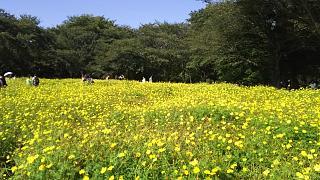 20171009昭和記念公園(その49)