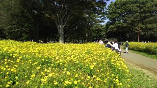 20171009昭和記念公園(その50)