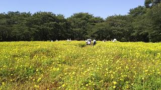 20171009昭和記念公園(その51)