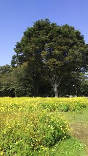 20171009昭和記念公園(その52)