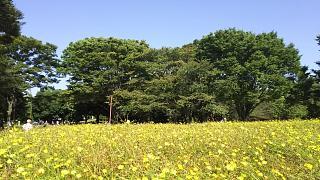 20171009昭和記念公園(その53)