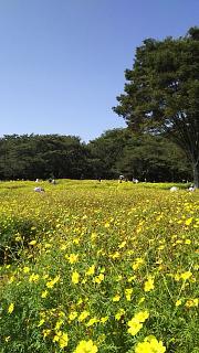 20171009昭和記念公園(その54)