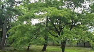 20170917太秦広隆寺(その9)