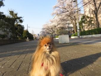 春のお散歩 2