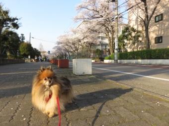 春のお散歩 1