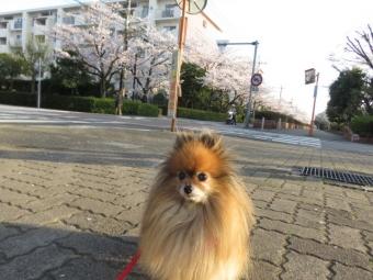 春のお散歩 4
