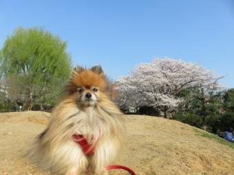 春のお散歩 5