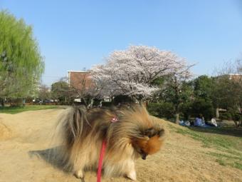 春のお散歩 6