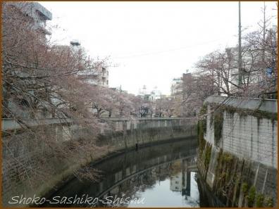 20180320  神田川  3   桜下見