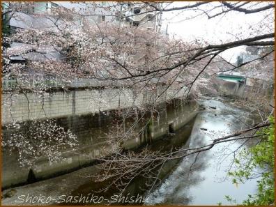 20180320  神田川  6   桜下見