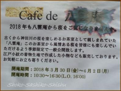 20180320  神田川  10   桜下見
