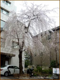 20180320  早稲田  5   桜下見