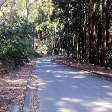 丸っきり林道