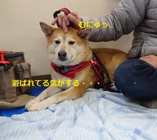 DSC_5321.jpg
