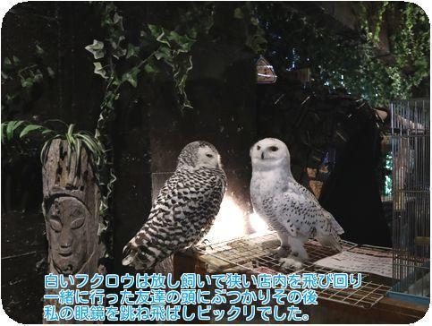 ④白いフクロウ
