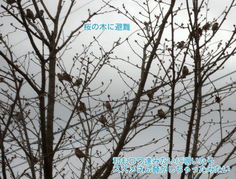 201803131135014c3.jpg