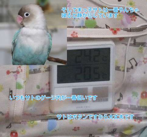 ⑤サト温度
