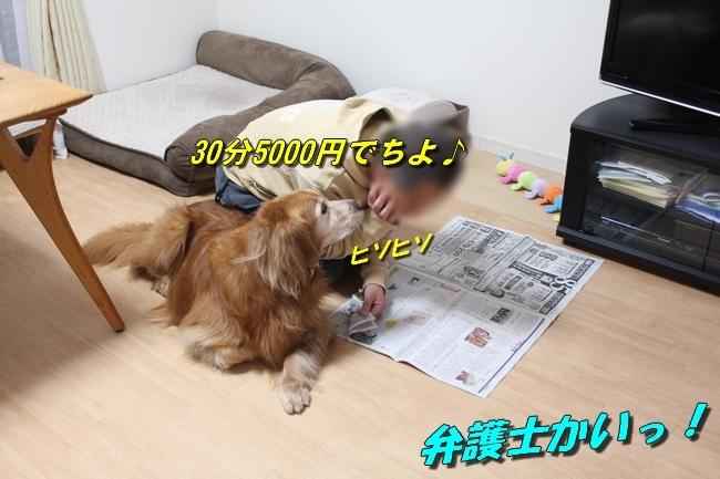 新聞おねだり 006
