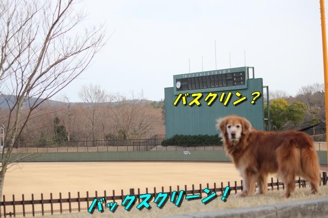 防災公園梅 067