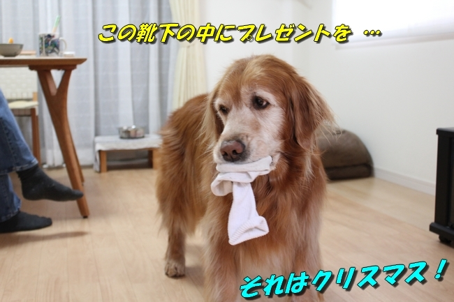靴下 003