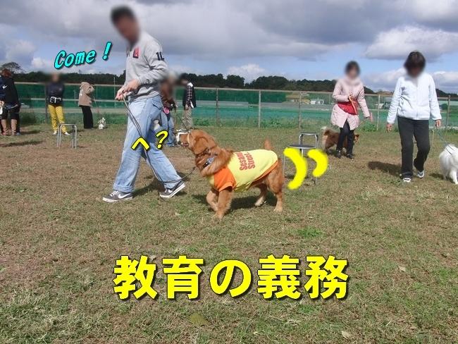 CIMG3132.jpg